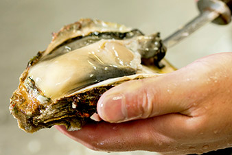 岩牡蠣をさばく
